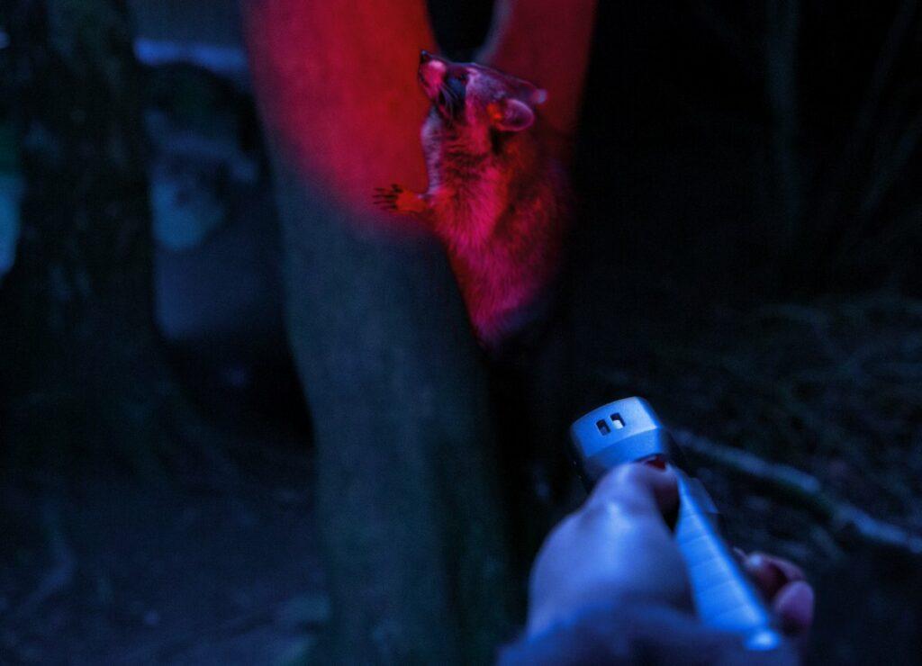 Tierbeobachtung im dunklen mit Rotlichtfunkiton von Abus